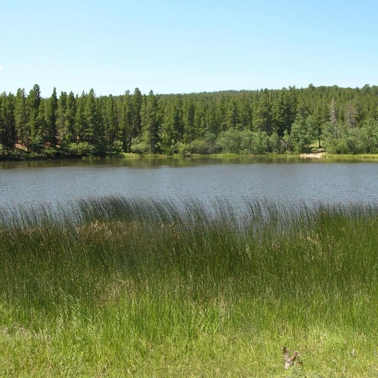 Mud Lake: Water, Ore, & Shrubs