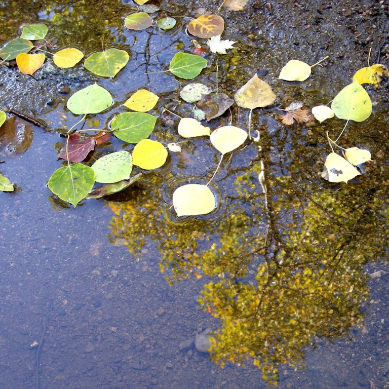 Research: Lake Devlin Flood