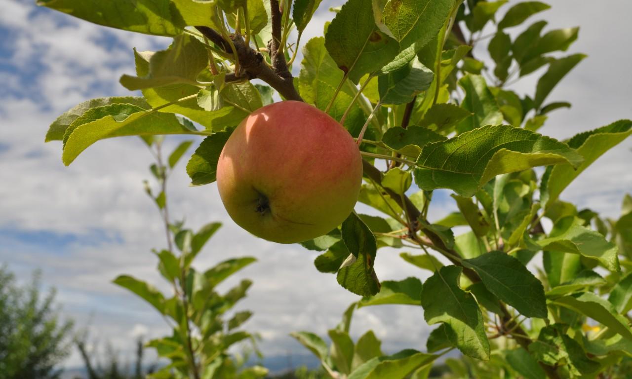Experimental Tree Farm Bears Fruit