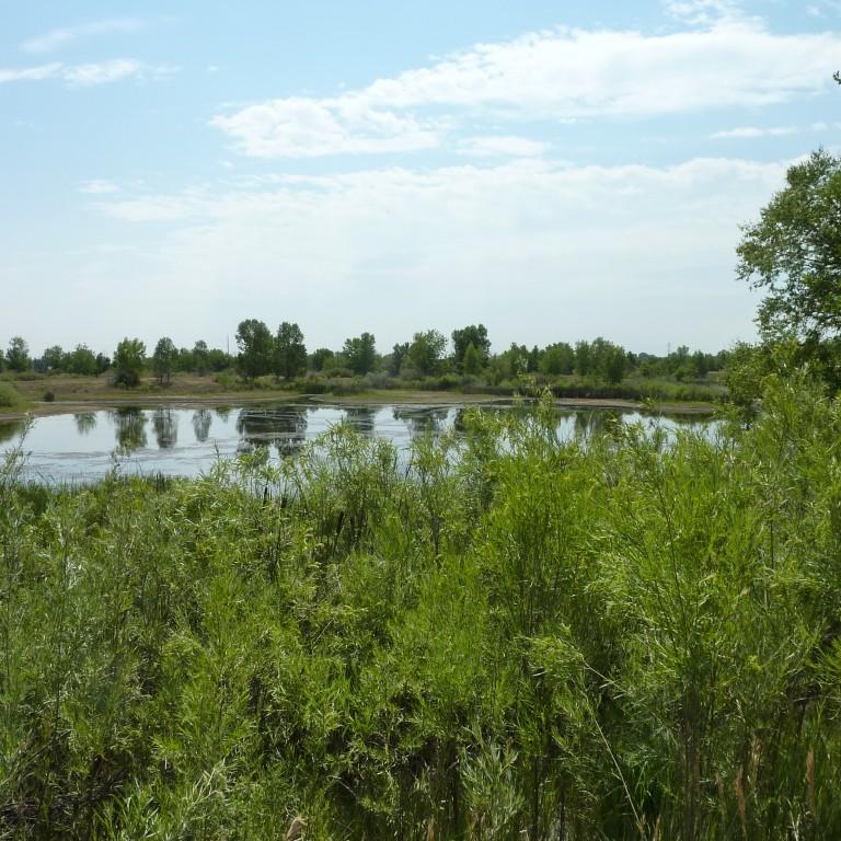 Behind a Name: Ricky Weiser Wetland