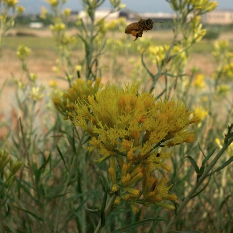 Help Pollinators Thrive