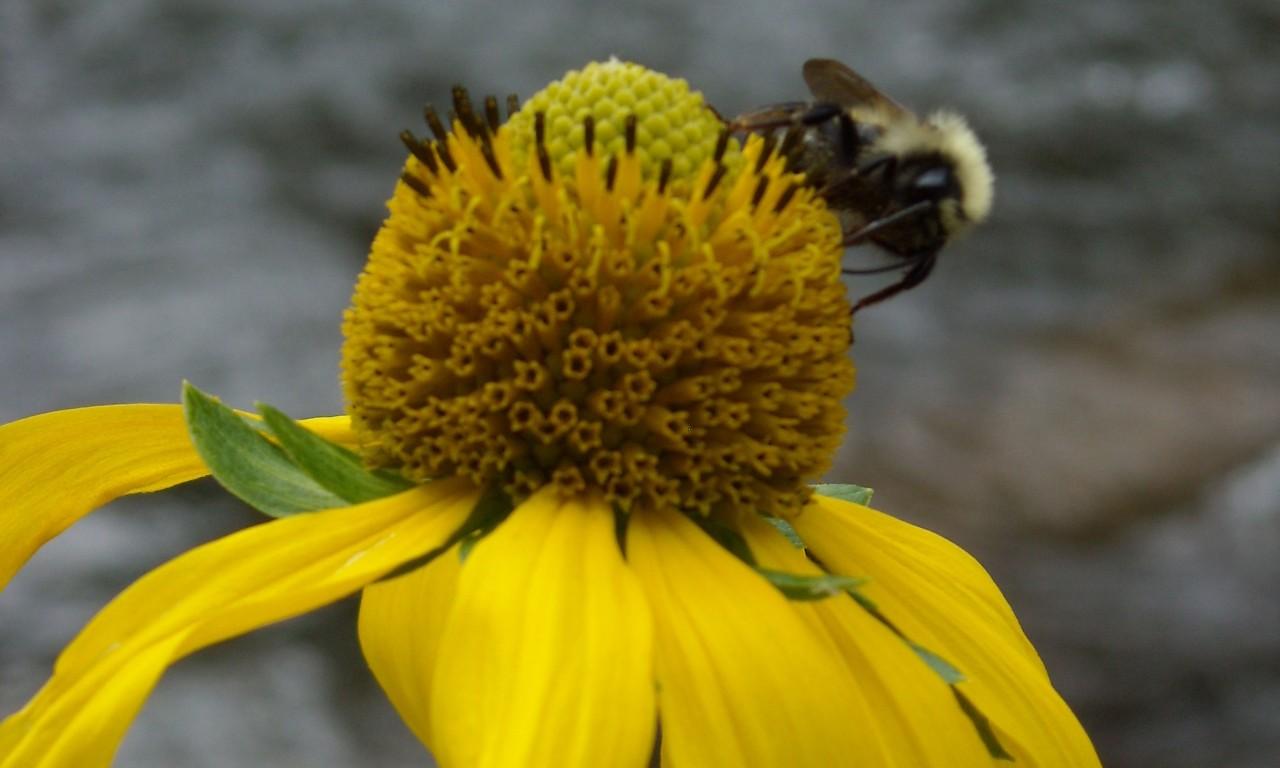 Celebrate National Pollinator Week (June 15 – 21)