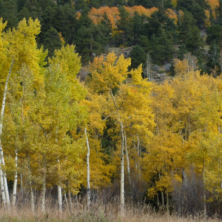 Autumn Transition: Trees, Bears and Bats