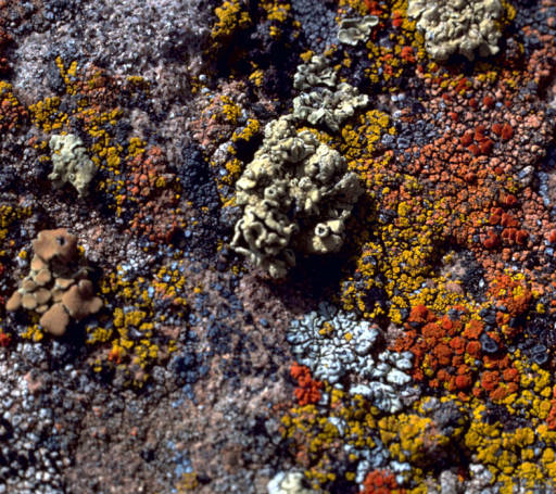 Various lichens on rock:  Lichens are plentiful and very successful.  Many  different species share this rock. They have existed on earth for at least 400 million years, giving them lots of time to diversify.