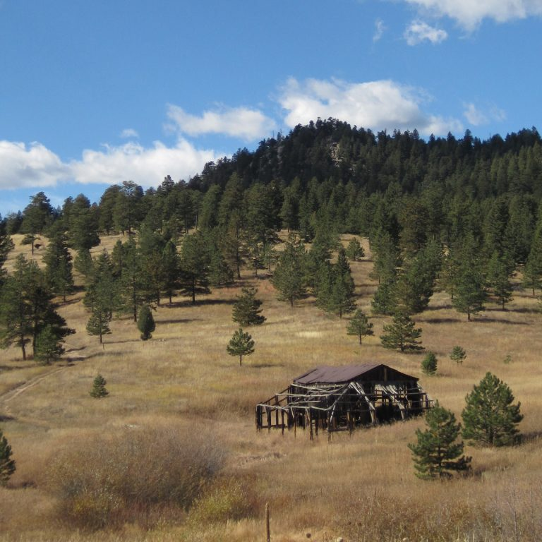 Walker Ranch Fire Mitigation Forestry Project