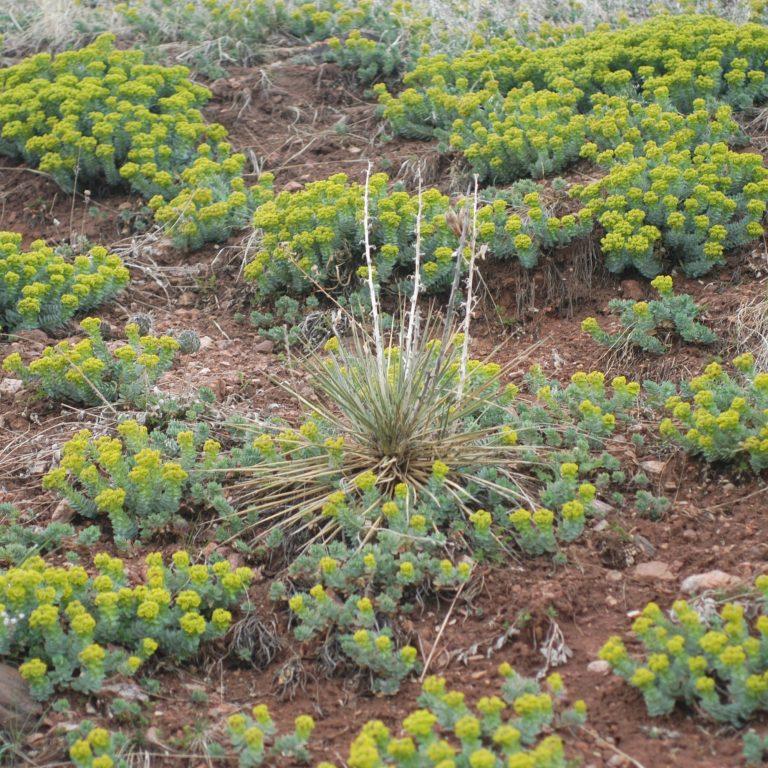 Weeds: Integrated Pest Management