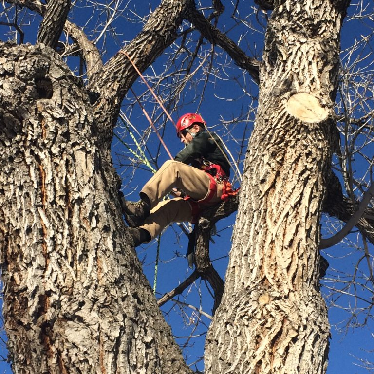 A Day in the Life: Urban  Forestry Team