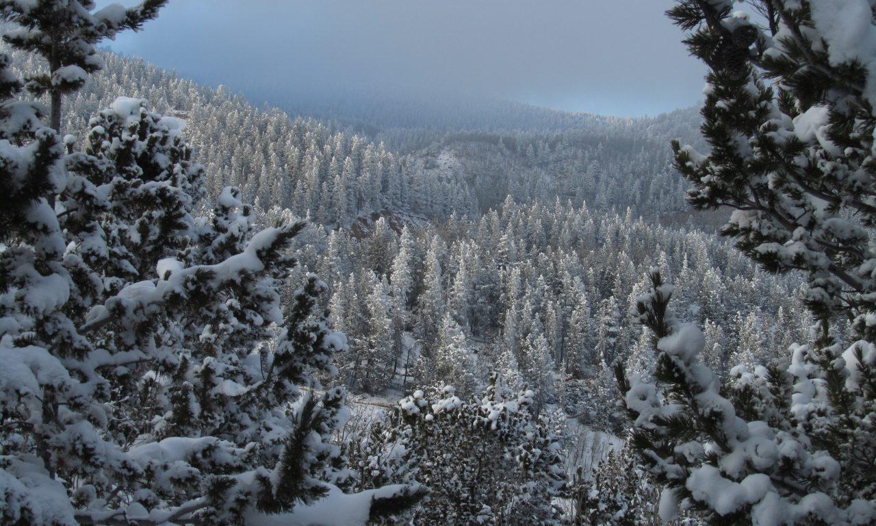 Winter Walking Guide