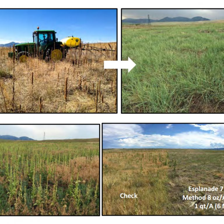 Research Report: Weed Control