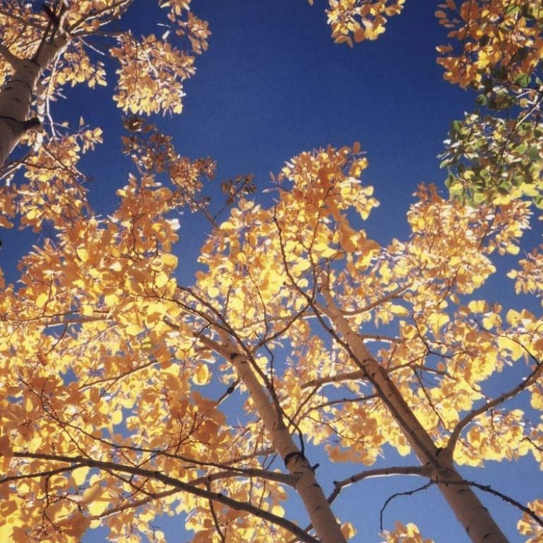 Beautiful Colors & Cool Temperatures – Time to Get Outdoors