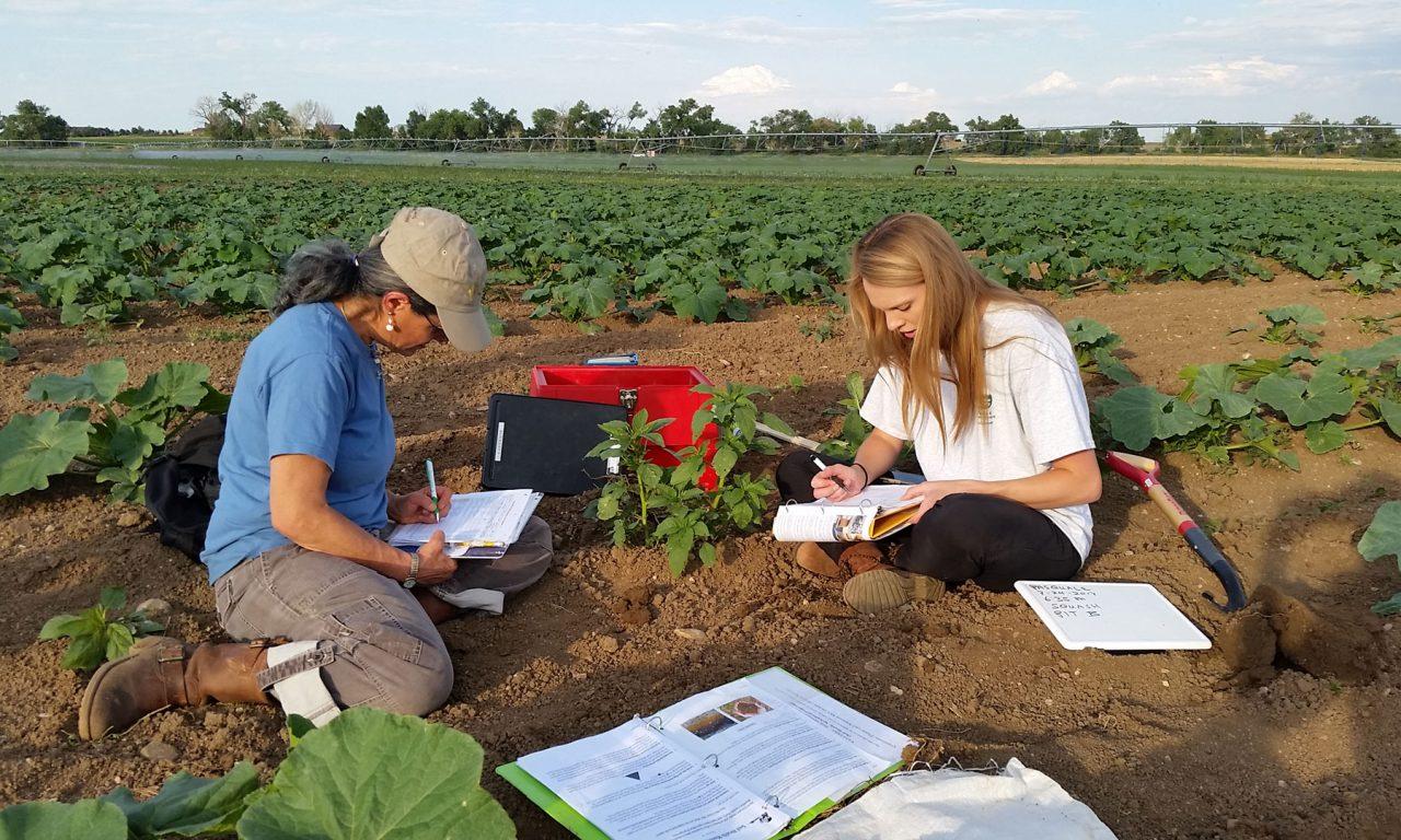 The Soil Revolution: Part 1