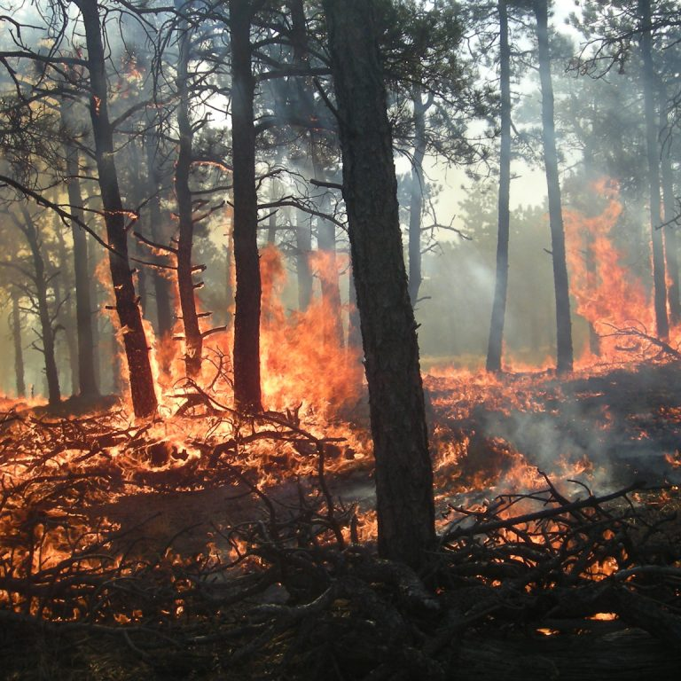Protection from Fire: Zone Defense
