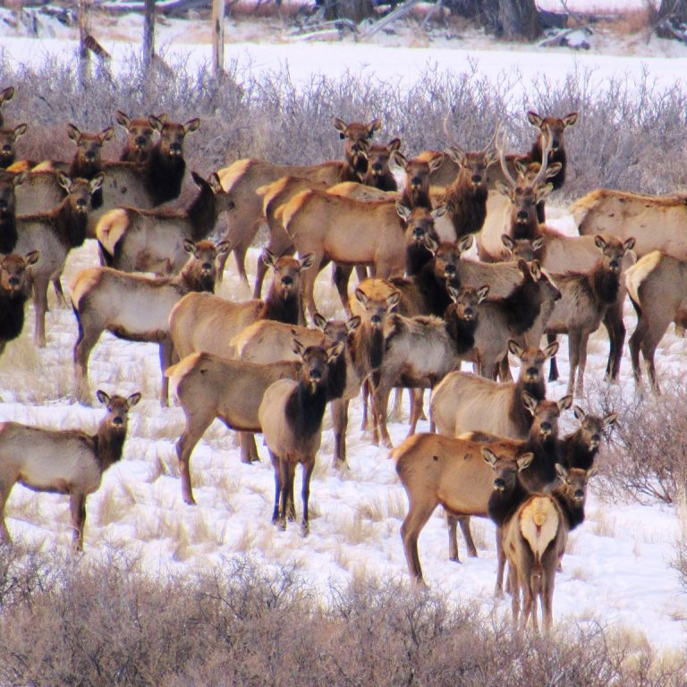 Elk and Vegetation: the First Year