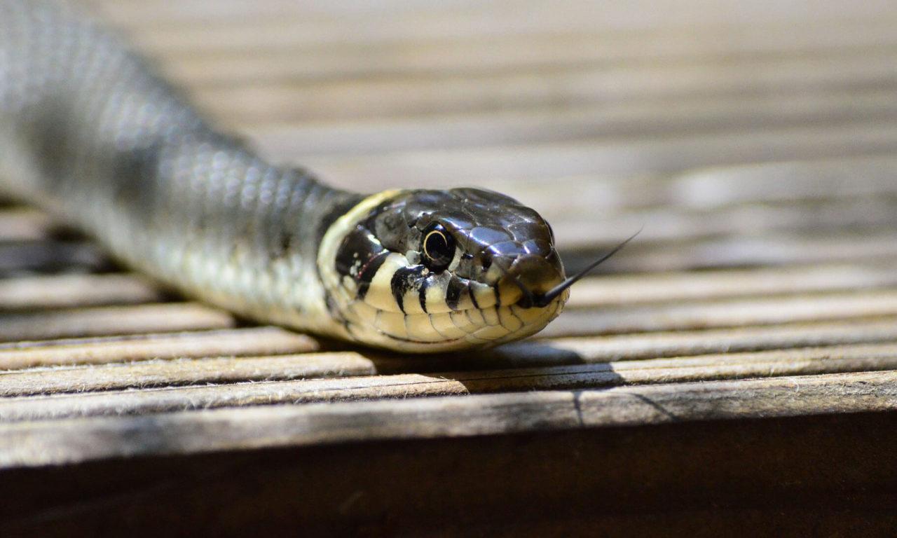 A Winter Snake's Tale