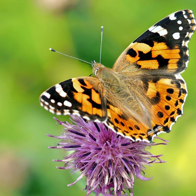 Beloved Butterfly Trail