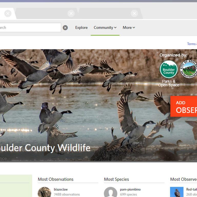 Capturing Wildlife: iNaturalist Style