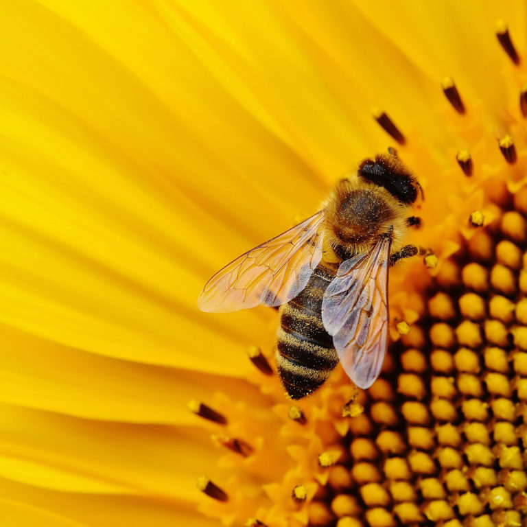 Bees in the High Plains