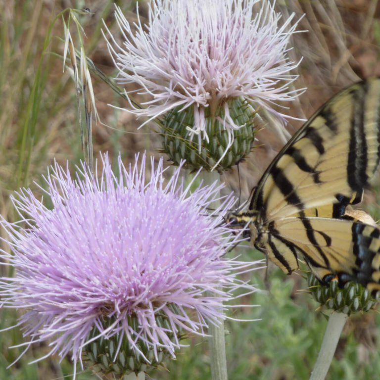 Bring Butterflies Your Way