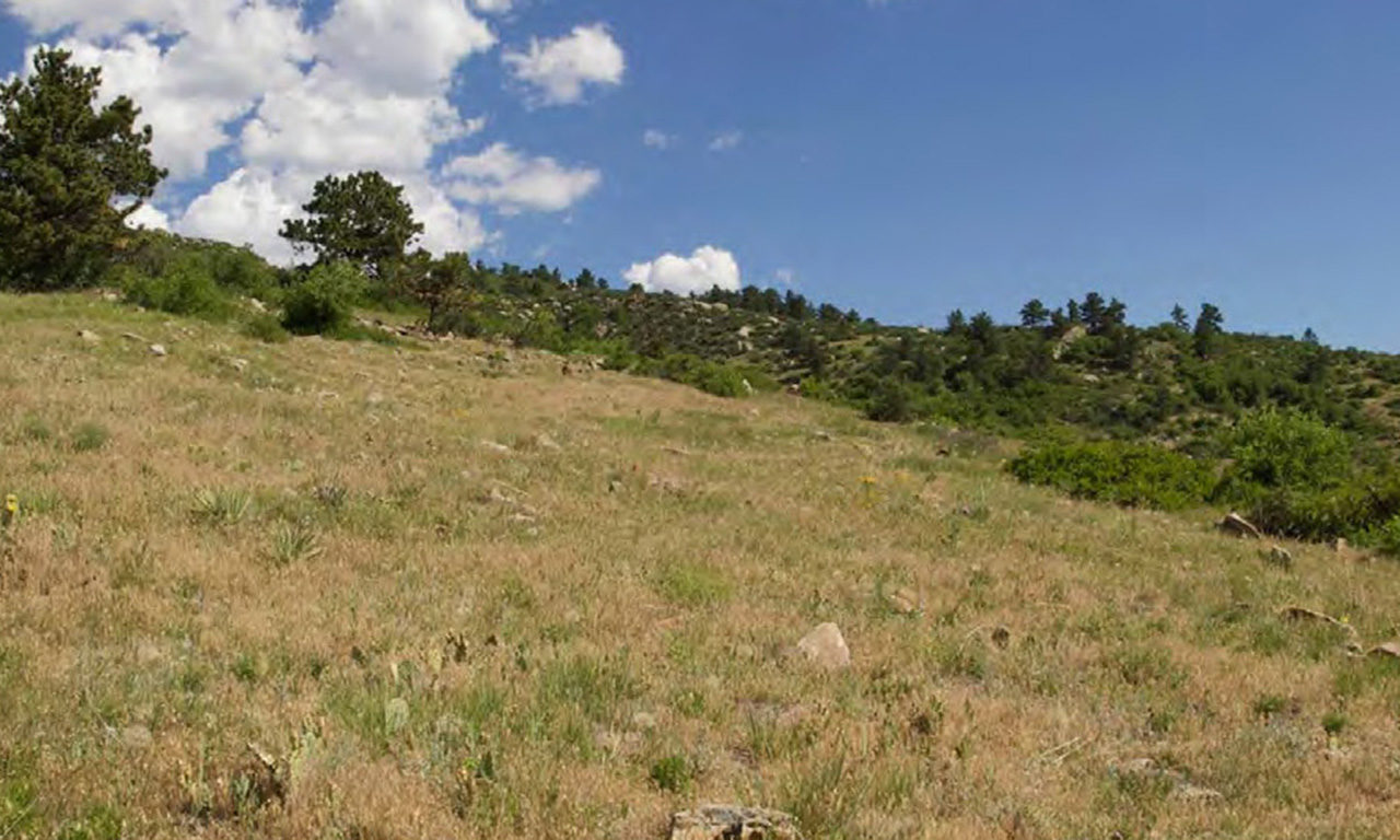 Research: Cheatgrass Impacts on Mammal, Bird, & Butterfly Populations