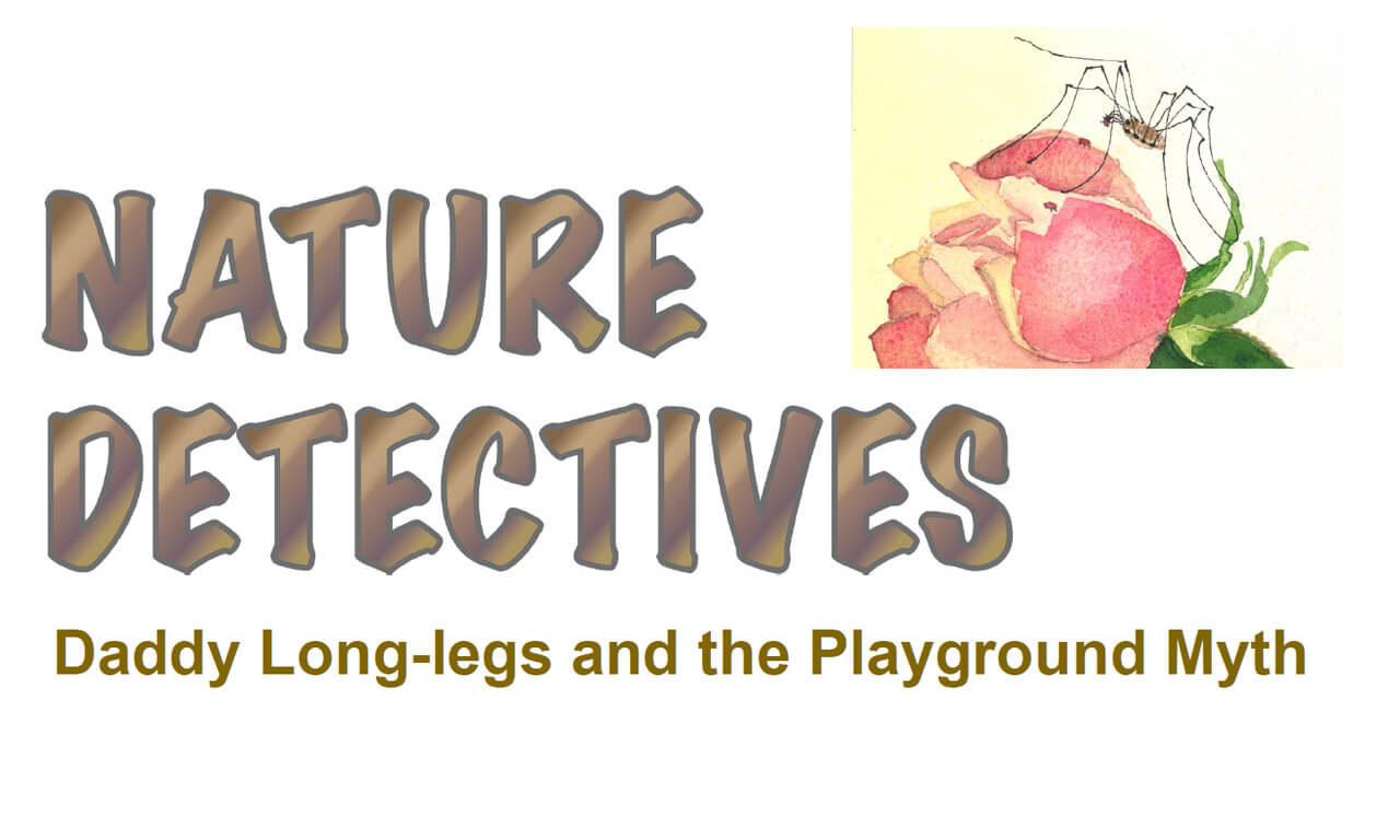Daddy Long-legs & The Playground Myth