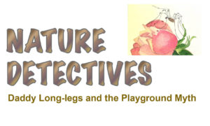 Nature Detectives - Daddy Long Legs