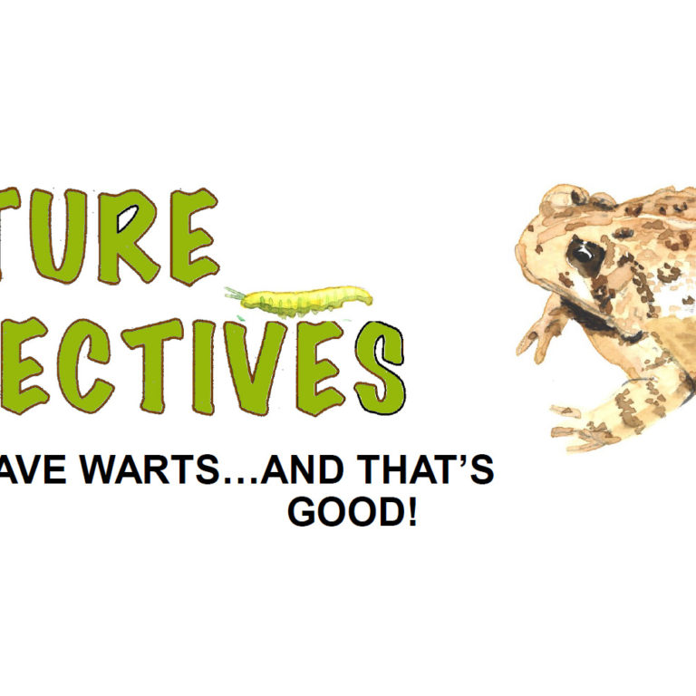 Toads Have Warts… And That's Good!